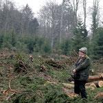 Der Fichtenwald ist gefallen