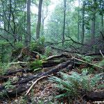 Altholzbestand sichern vielen Tieren Lebensraum