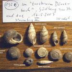 Sammlung von Stromberg (Dörrebachtal)