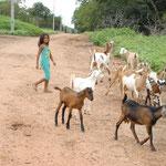 Aus 5 Ziegen wird eine ganze Herde