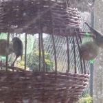 tressage mangeoire à oiseaux, baie de somme