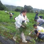 除草作業は収穫が終わるまで続きます。