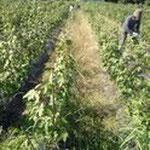 7月~9月 継続して除草作業を行います。雑草達のたくましさに脱帽でした。