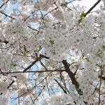 お花見会_03