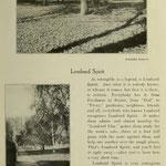 images of campus - Lombard Spirit