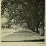 images of campus - elm hedge