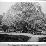Lombard elm 1925 (Old Main to left); succumbed to dutch elm disease and was cut down on 8/1/1966