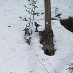 Trotz Schnee sind die Ziele verwendbar