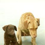 klein Ecco und Momo