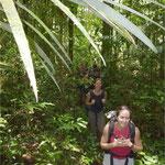 Randonnée en forêt primaire
