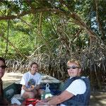 Balade sur les bords de la mangrove
