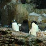 aber für die Pinguine ein Paradies.