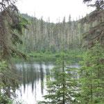Jetzt sind wir im schönen Jasper Nationalpark angekommen.