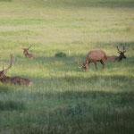 Auch hier gibts viele Streifenhörnchen, Elche, Hirsche und Rehe...