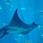 Das Aquarium von Atlanta ist wirklich sehenswert...