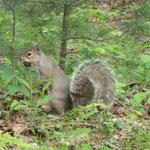 überall Eichhörnchen... die sind so süss...