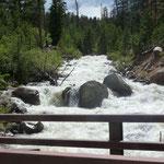 Nach viel Regen haben die Flüsse Hochwasser...