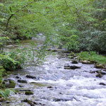 noch mehr Wasser und noch mehr Wald...