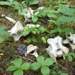 Im Wald endecken wir Knochen. War sicher ein Bär am Werk hier...