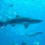 noch ein Hai...