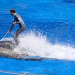 Die Delphinshow war auch klasse...