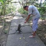 Angekommen im Affenwald in Ubud.