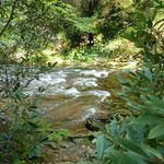 Wasser und Wald...