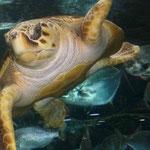 und Wasserschildkröten...