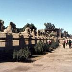 Luxor, viale dei Leoni