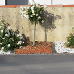 Création de parterre de fleurs