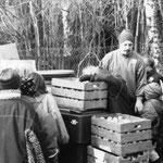 Eine große Anzahl Äpfel wurde zur Verfügung gestellt