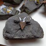 Die seltene Gattung der Stein-Eule
