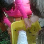 Die Unmengen an Kleintieren im Wasser entdeckt man oft erst auf den zweiten Blick