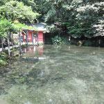 天然記念物 湧玉池 溶岩下から水が湧いて美味でした