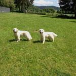 Joline und Cassis