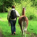 Eins mit der Natur, dem Lama und sich selbst sein - was gibt es Schöneres?