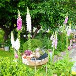 Jardin des Trollius - Vierzon