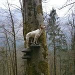 Eichrussell-Terrierhörnchen