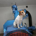 Hund und Maschine