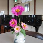 百日草の花を摘んで子どもたちが花瓶に生けました