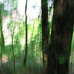 Foto Regina Lenz. Fotografische Abstraktion Grün