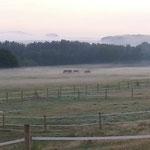 Stuten mit Fohlen im Herbst
