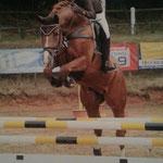 Ludwig, mehrfach Springpferde gewonnen