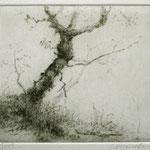 Baum über der Wolfsschlucht // 11,5 x 10cm