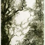 Zwischen hohen Bäumen // 18 x 45cm // Kaltnadelradierung