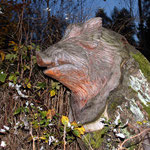 in der Dämmerung - ein Wildschwein