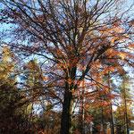 Herbstlich - der Gigant