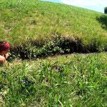 Bei 30 Grad gibts eine Abkühlung im Bewässerungsgraben ;-))