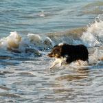 Mini liebt das Meer