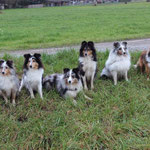 Mandy und ihre Nachkommen: Amor,Bella,BlueBoy,Mandy,Finn,Dini